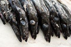 Μαύρο scabbardfish - Aphanopus carbo - στην αγορά Φουνκάλ ψαριών Στοκ Φωτογραφίες