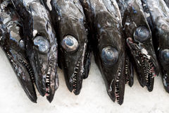 Μαύρο scabbardfish - Aphanopus carbo - στην αγορά Φουνκάλ ψαριών Στοκ φωτογραφία με δικαίωμα ελεύθερης χρήσης