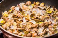 μαλάκια που μαγειρεύουν την ιταλική πανοραμική λήψη κουζίνας Στοκ εικόνες με δικαίωμα ελεύθερης χρήσης