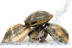 Μαλάκια που πέφτουν στο νερό Στοκ Εικόνες