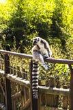 Μαδαγασκάρη Στοκ εικόνες με δικαίωμα ελεύθερης χρήσης