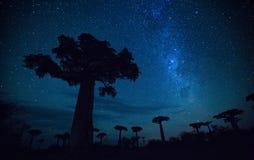 Μαδαγασκάρη Στοκ Εικόνα