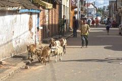 Μαδαγασκάρη Antsirabe Στοκ εικόνα με δικαίωμα ελεύθερης χρήσης