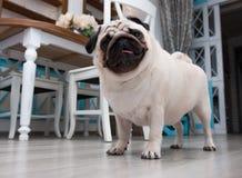 μαλαγμένος πηλός Μπροστινό σκυλί Στοκ φωτογραφία με δικαίωμα ελεύθερης χρήσης