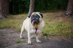 Μαλαγμένος πηλός σε ένα πάρκο στοκ φωτογραφίες με δικαίωμα ελεύθερης χρήσης