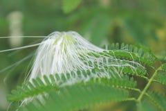 Μαλακά άσπρα λουλούδια Στοκ Φωτογραφίες