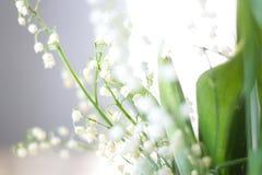 Μαλακά θολωμένα λουλούδια ενός κρίνου της κοιλάδας Στοκ εικόνα με δικαίωμα ελεύθερης χρήσης