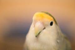 Μαλακά μάτια Στοκ φωτογραφίες με δικαίωμα ελεύθερης χρήσης
