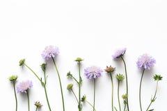Μαλακά πορφυρά λουλούδια σε Whitebackground Στοκ φωτογραφίες με δικαίωμα ελεύθερης χρήσης