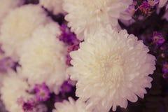 Μαλακή εστίαση της άσπρης ανθοδέσμης λουλουδιών χρυσάνθεμων Στοκ εικόνα με δικαίωμα ελεύθερης χρήσης