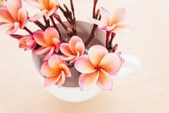 (Μαλακός τρύγος) ρόδινο frangrant plumeria ή frangipani λουλουδιών μέσα Στοκ Φωτογραφίες
