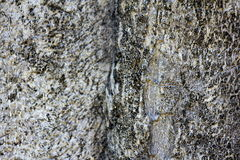 Μαλακός φλοιός δέντρων τροπικών δασών εστίασης στοκ εικόνες