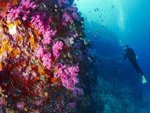 Μαλακό κοράλλι με το δύτη Στοκ εικόνες με δικαίωμα ελεύθερης χρήσης