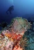 Μαλακό κοράλλι, νησί Sipadan, Sabah Στοκ Εικόνες
