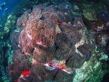 Μαλακό κοράλλι Στοκ Εικόνα