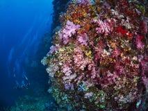 Μαλακό κοράλλι Στοκ φωτογραφία με δικαίωμα ελεύθερης χρήσης