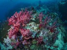 Μαλακό κοράλλι Στοκ φωτογραφίες με δικαίωμα ελεύθερης χρήσης
