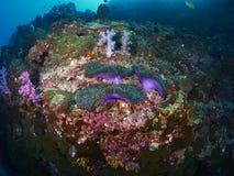 Μαλακό κοράλλι Στοκ Φωτογραφίες