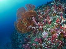 Μαλακό κοράλλι Στοκ Εικόνες