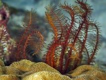 Μαλακό κοράλλι Στοκ εικόνες με δικαίωμα ελεύθερης χρήσης