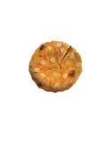 Μαλακό μπισκότο Στοκ εικόνες με δικαίωμα ελεύθερης χρήσης