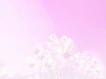 Μαλακό λουλούδι κόσμου εστίασης στο υπόβαθρο κρητιδογραφιών μεταλλικού θόρυβου Στοκ Φωτογραφίες