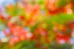 Μαλακό πορτοκαλί κίτρινο ρόδινο θερινό καλοκαίρι ανθών bokeh γλυκό backg Στοκ φωτογραφία με δικαίωμα ελεύθερης χρήσης