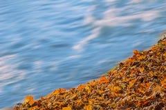 Μαλακό ρέοντας νερό και ζωηρόχρωμα φύλλα φθινοπώρου Στοκ Εικόνες