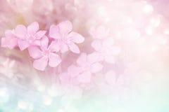 Μαλακό ρόδινο υπόβαθρο λουλουδιών με το bokeh στον εκλεκτής ποιότητας τόνο Στοκ Εικόνες