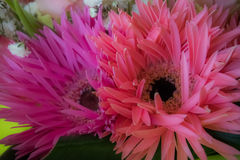 Μαλακό ρόδινο υπόβαθρο λουλουδιών στοκ φωτογραφία με δικαίωμα ελεύθερης χρήσης