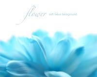 Μαλακό υπόβαθρο λουλουδιών εστίασης με το διάστημα αντιγράφων Στοκ εικόνες με δικαίωμα ελεύθερης χρήσης