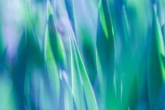 Μαλακό υπόβαθρο χλόης εστίασης πράσινο Πράσινο λιβάδι χλόης το ηλιόλουστο πρωί Στοκ φωτογραφία με δικαίωμα ελεύθερης χρήσης