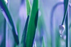 Μαλακό υπόβαθρο χλόης εστίασης πράσινο Πράσινο λιβάδι χλόης το ηλιόλουστο πρωί Στοκ Εικόνες