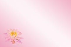 Μαλακό λωτός εστίασης ή λουλούδι κρίνων νερού στο ρόδινο αφηρημένο υπόβαθρο κρητιδογραφιών Στοκ Εικόνες