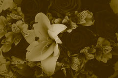 Μαλακό ύφος duotone χρώματος ανθοδεσμών λουλουδιών Στοκ Φωτογραφίες