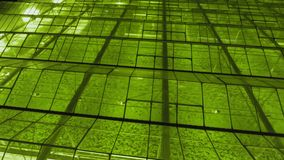 Μεγάλα βιομηχανικά θερμοκήπια τη νύχτα φιλμ μικρού μήκους