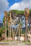 Μεγάλα δέντρα χαλασμένα από τα μικρά έντομα Στοκ φωτογραφία με δικαίωμα ελεύθερης χρήσης
