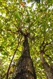 Μεγάλα δέντρα Στοκ φωτογραφία με δικαίωμα ελεύθερης χρήσης
