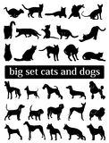 Μεγάλα καθορισμένα γάτες και σκυλιά Σκιαγραφίες Στοκ Φωτογραφίες