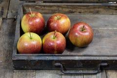 Μεγάλα κόκκινα μήλα σε ένα σκοτεινό ξύλινο κιβώτιο Ξύλινα κλουβί και μήλα επάνω Στοκ Εικόνα