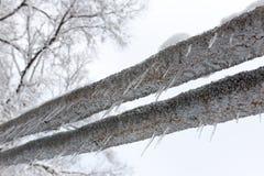 Μεγάλα παγάκια που κρεμούν από έναν σωλήνα στη φύση Στοκ Εικόνα