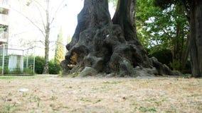 Μεγάλα παλαιά δέντρα στην οδό στη νότια πόλη 4K απόθεμα βίντεο