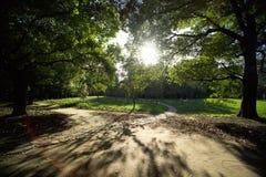 μεγάλα παλαιά δέντρα Στοκ Εικόνες