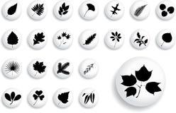 μεγάλα φύλλα κουμπιών 1 β π&omic Στοκ Εικόνες