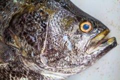 Μεγάλα ψάρια στην αγορά Επικεφαλής κινηματογράφηση σε πρώτο πλάνο ψαριών θάλασσας με τα βράγχια και τη σύσταση κλίμακας Στοκ Εικόνες