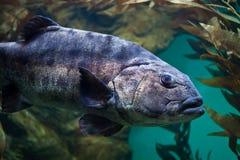 μεγάλα ψάρια Στοκ Εικόνα