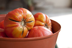 μεγάλες ντομάτες Στοκ Φωτογραφίες