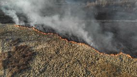 Μεγάλης κλίμακας πυρκαγιές Καίγοντας χλόη και δέντρα σε μια μεγάλη πε απόθεμα βίντεο
