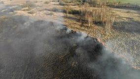 Μεγάλης κλίμακας πυρκαγιές Καίγοντας χλόη και δέντρα σε μια μεγάλη περιοχή απόθεμα βίντεο