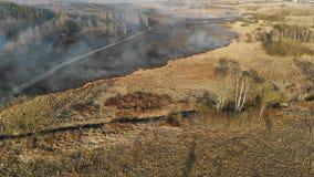 Μεγάλης κλίμακας πυρκαγιές Καίγοντας χλόη και δέντρα σε μια μεγάλη περιοχή φιλμ μικρού μήκους